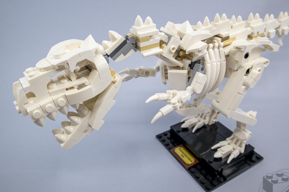 21320-dinosaur-fossils-10