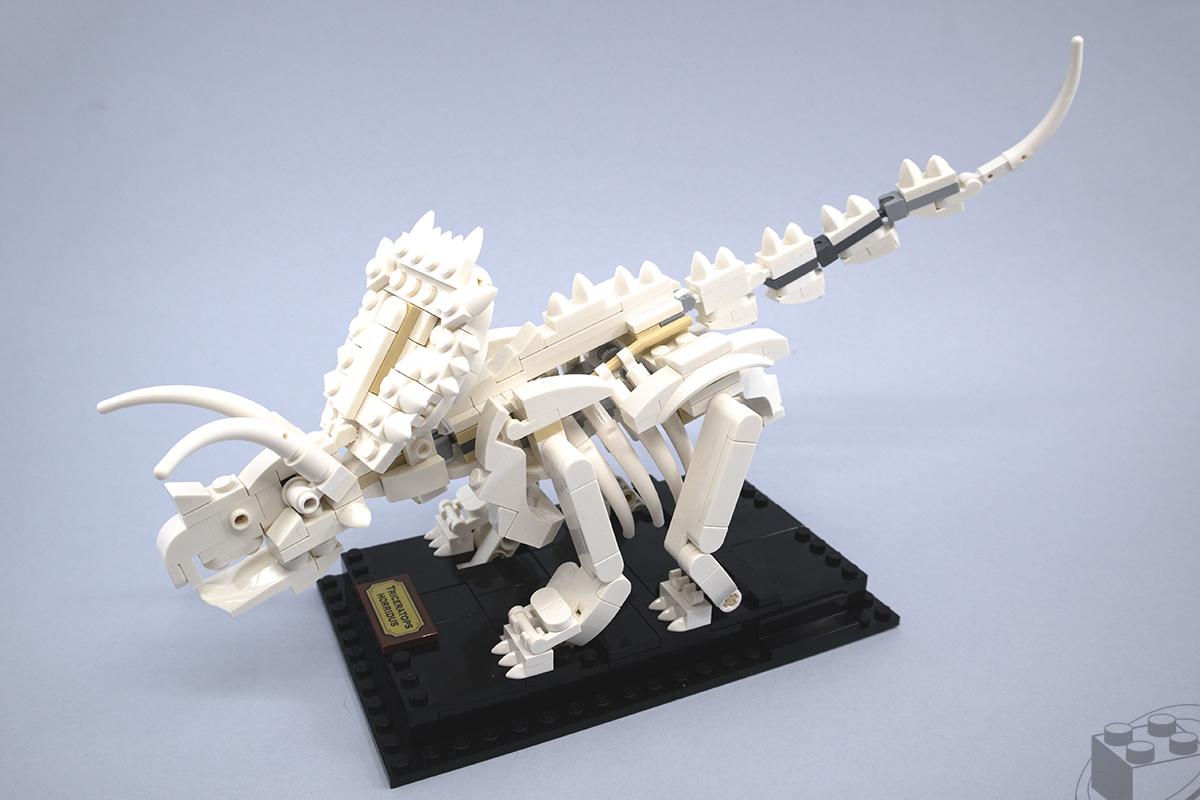 21320-dinosaur-fossils-2