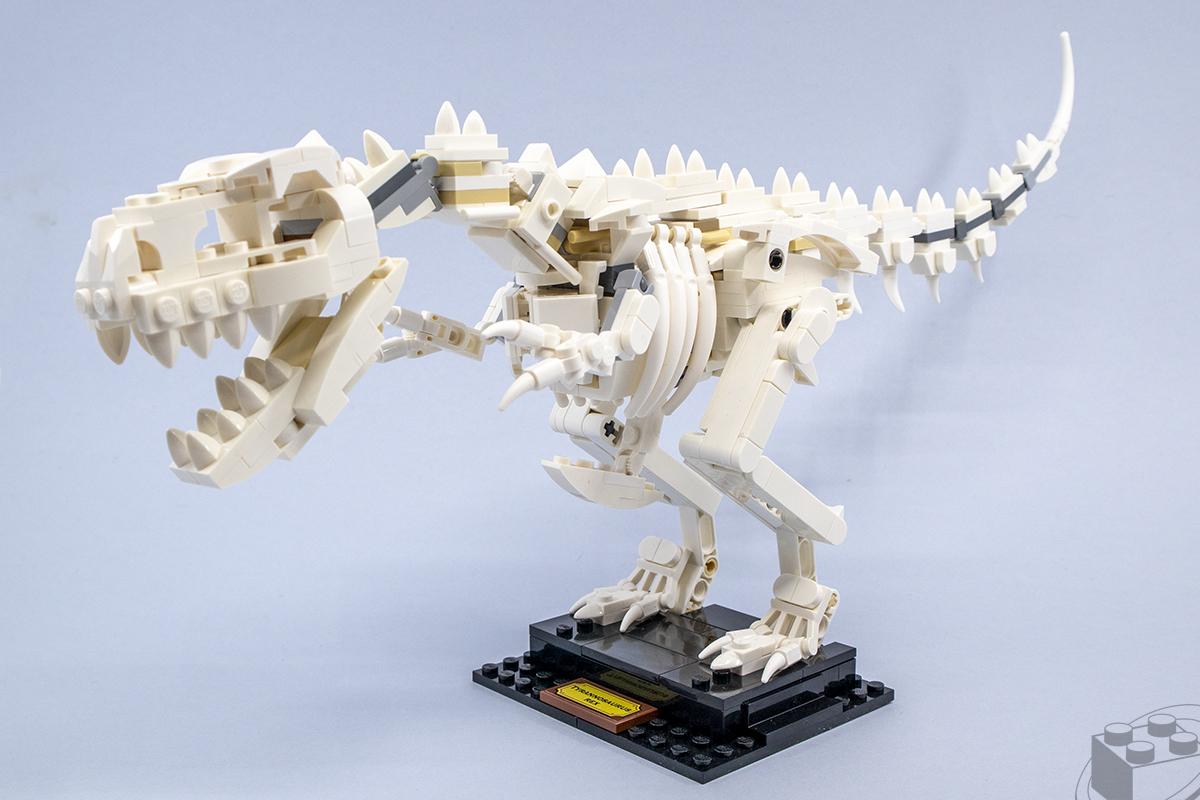 21320-dinosaur-fossils-8