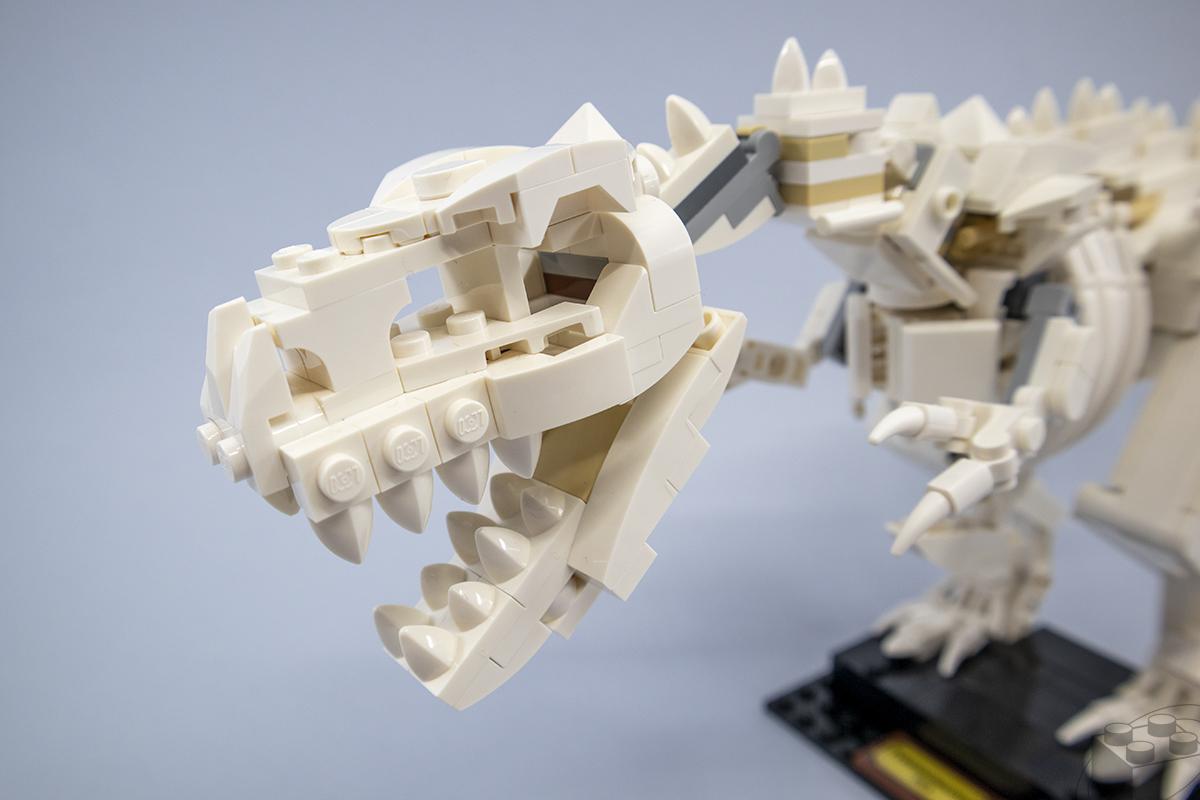 21320-dinosaur-fossils-9