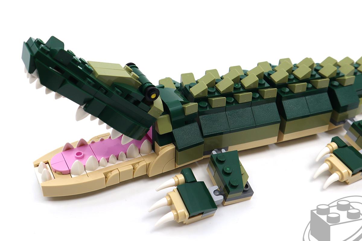 31121-crocodile-7